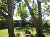 Poplar Trees on Grounds of Northland Cottage in Eastend, South Saskatchewan